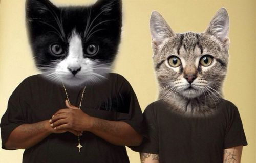 z Meow the Jewels